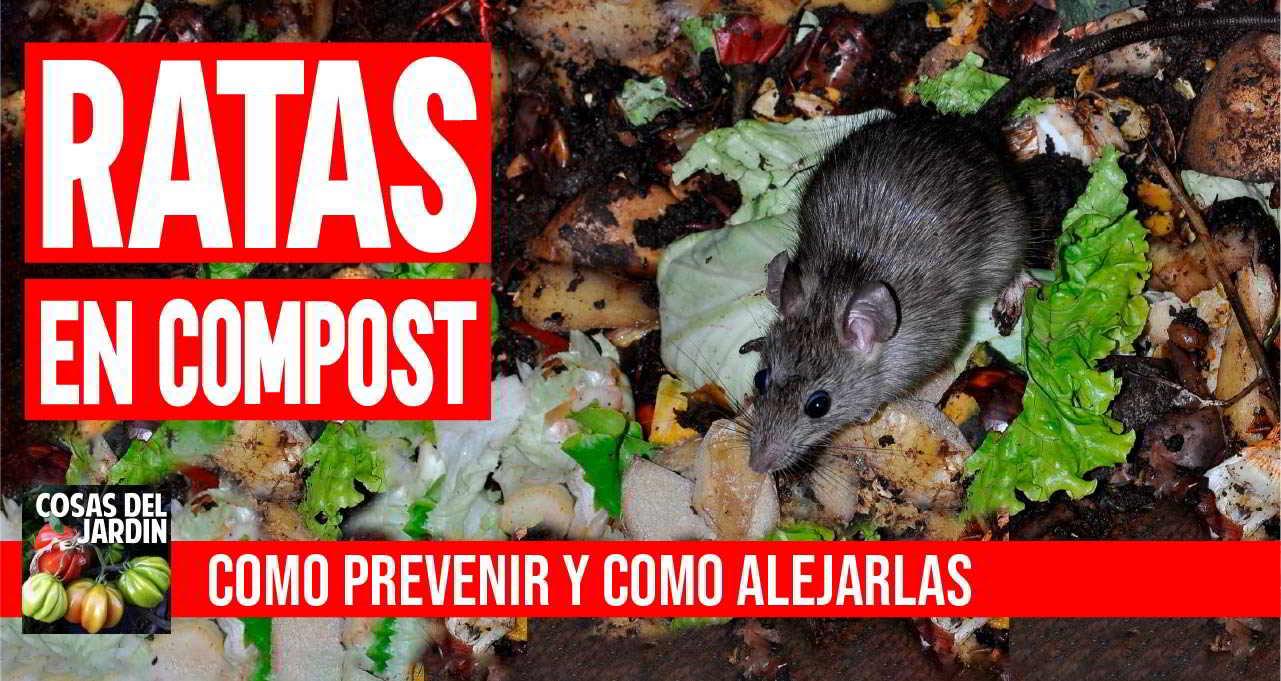 Como prevenir y alejar las ratas en el compost