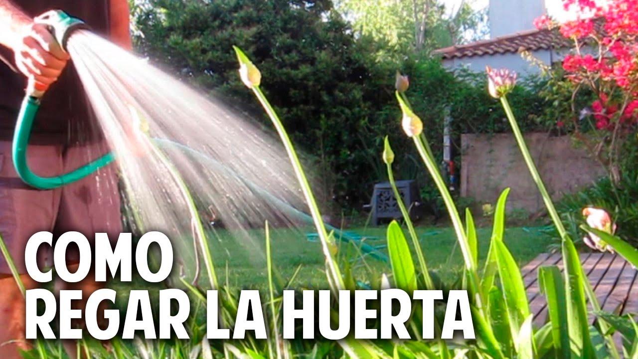 Cómo regar las plantas de la huerta