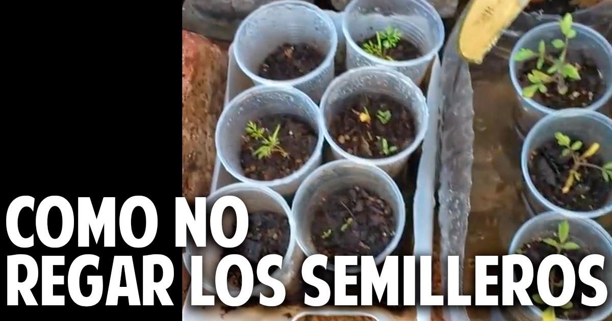 Como no regar los semilleros de tomate y otras respuestas – Cosas del Jardin responde! #1