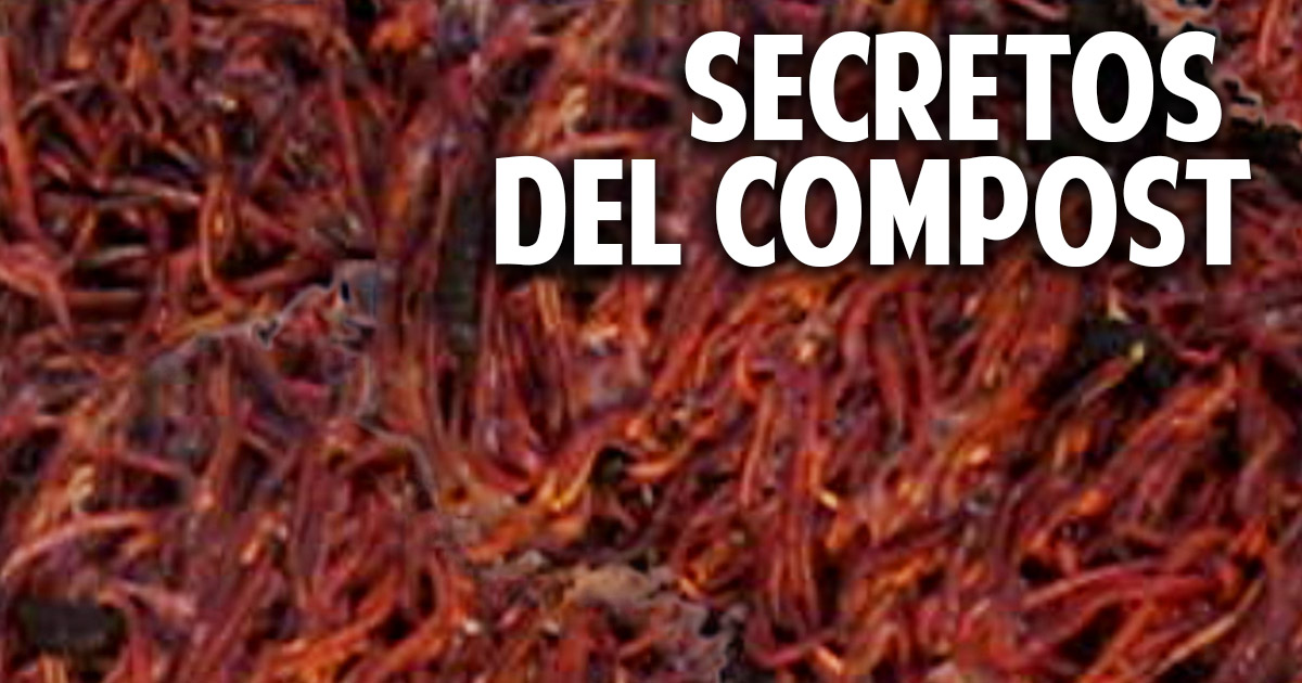 10 secretos que debes conocer sobre compost y humus de lombriz