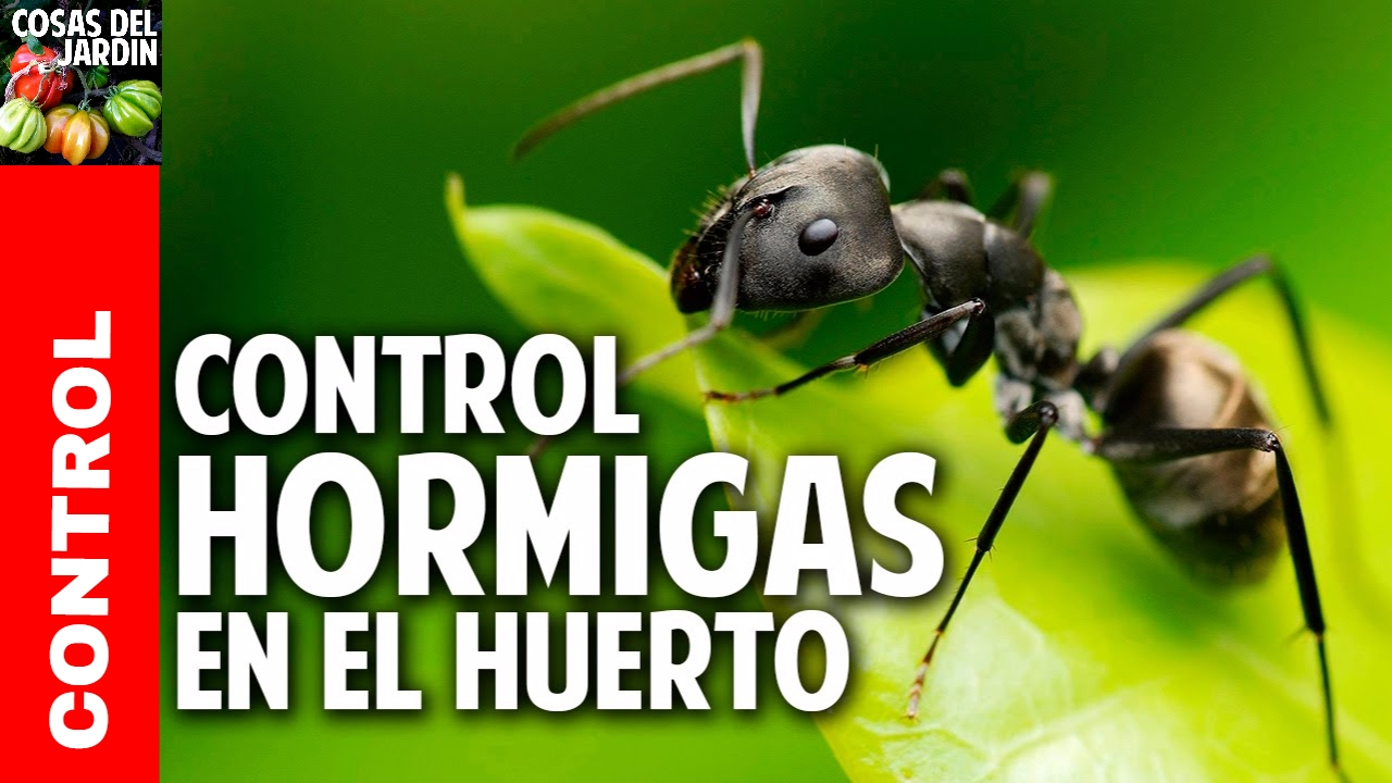 6 consejos para eliminar las hormigas del jardin