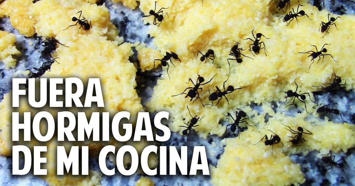 como eliminar hormigas de la cocina – aniquilamiento organico total – sin venenos
