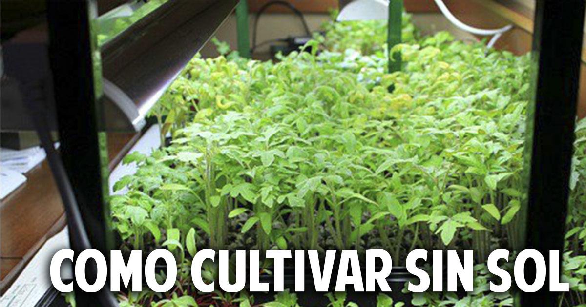 Còmo hacer una huerta con luz artificial paso a paso – Cultivo indoor