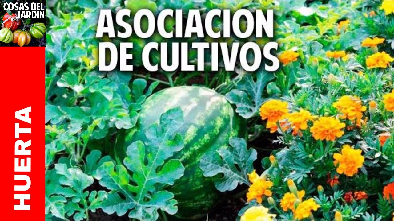 Cómo es la asociación de cultivos – Son 3 trucos y entendés todo @cosasdeljardin