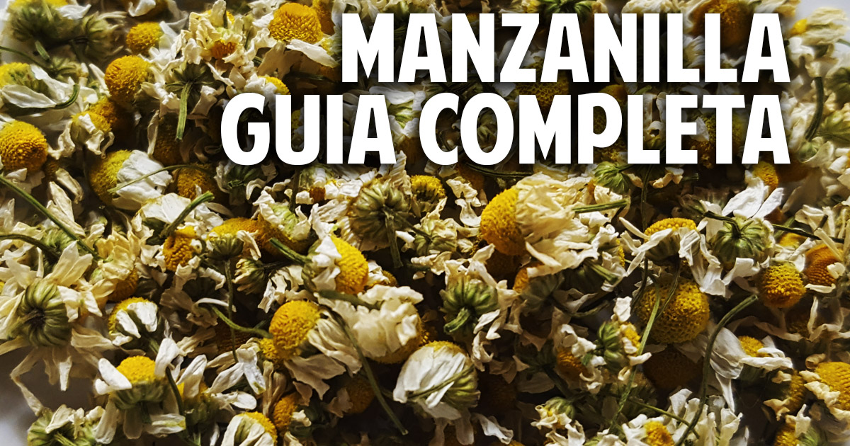 Guia completa para el cultivo de la manzanilla