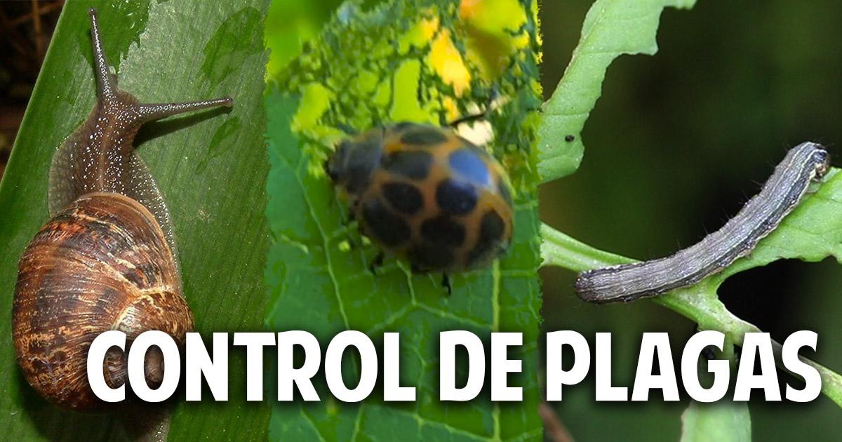 Quién se come mis plantas – Guía para controlar las plagas mas comunes del huerto