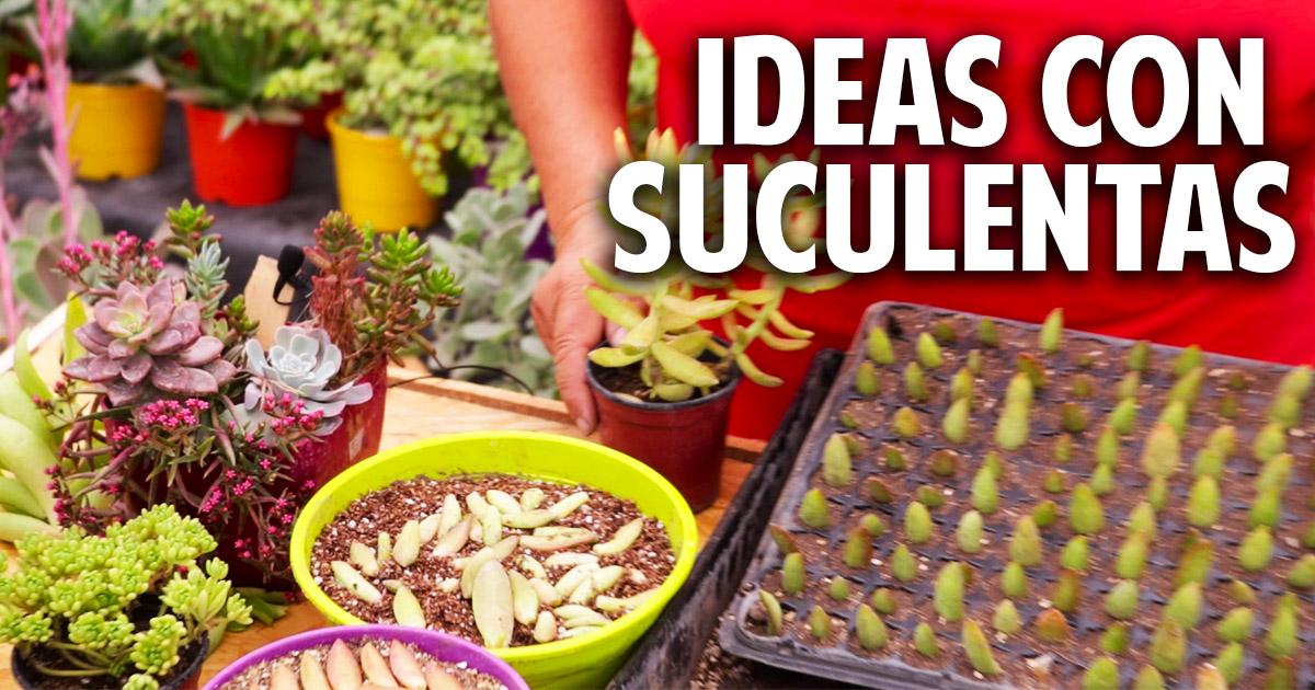 Ideas para plantar suculentas – Trucos del experto
