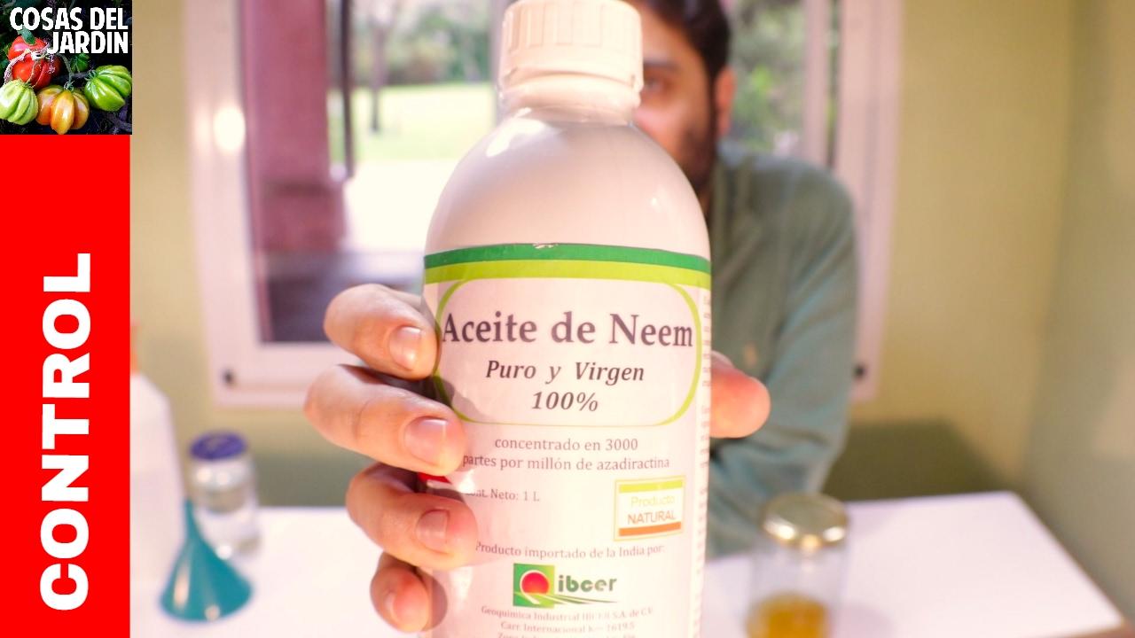 Cual es la forma correcta de preparar y utilizar el aceite de neem como insecticida
