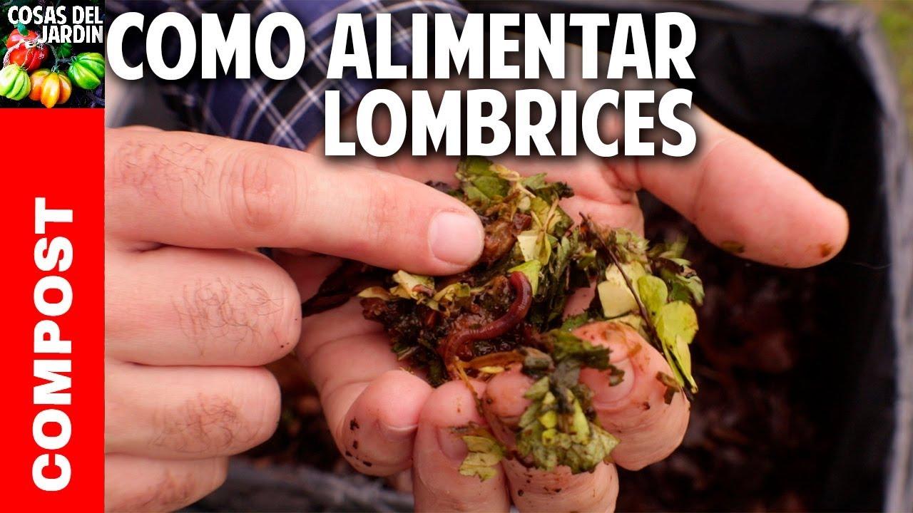 Todo lo que no sabías sobre la alimentación de las lombrices en la vermicompostera