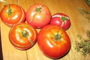 Cuando y como cosechar tomates - 4