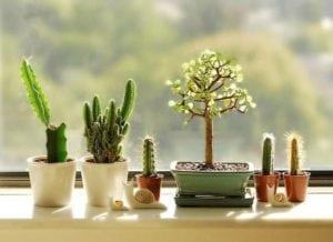 Qué tipo de luz natural necesitan nuestras plantas de interior? - 2