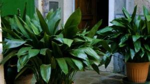 Qué tipo de luz natural necesitan nuestras plantas de interior? - 3