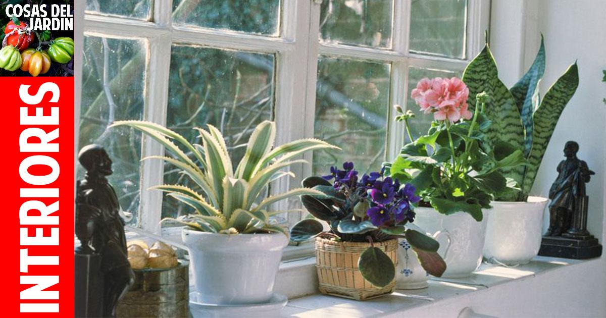 Qué tipo de luz natural necesitan nuestras plantas de interior?