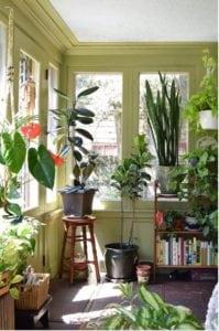 Qué tipo de luz natural necesitan nuestras plantas de interior? - 1