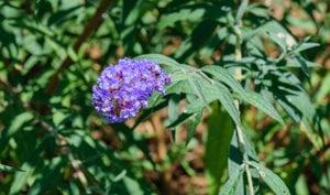 como podar rboles y arbustos que florecen en verano