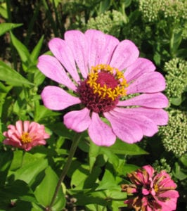 Como podar flores anuales