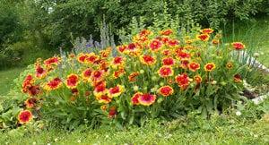 como podar flores perennes