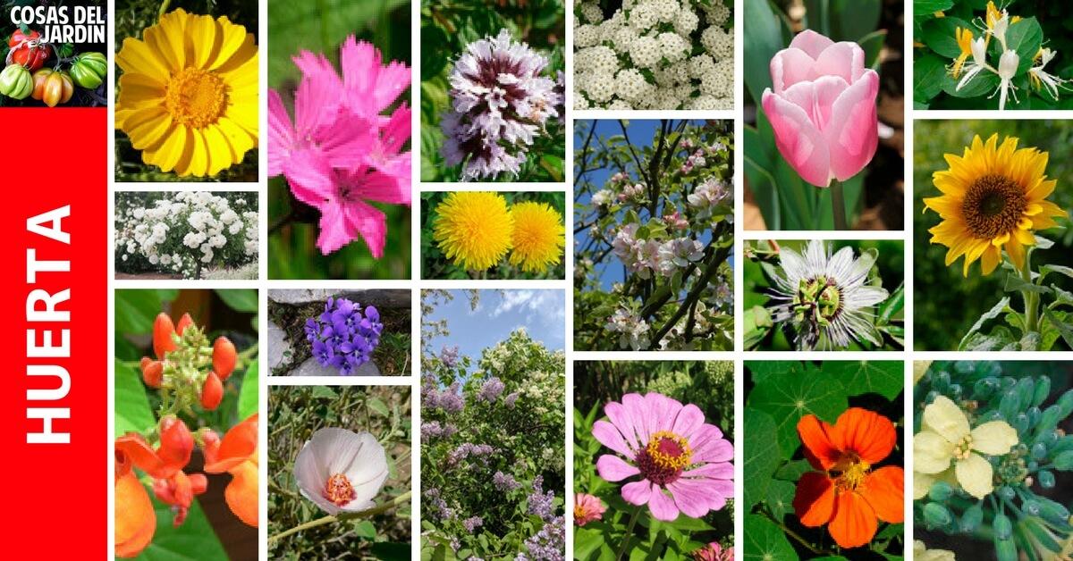 En esta guia te sorprenderas de cuantas flores comestibles tienes en tu jardín. Anímate a agregarlas a tus platos y ensaladas #huerto #huerta #Huertourbano #jardin #jardineria #cultivar
