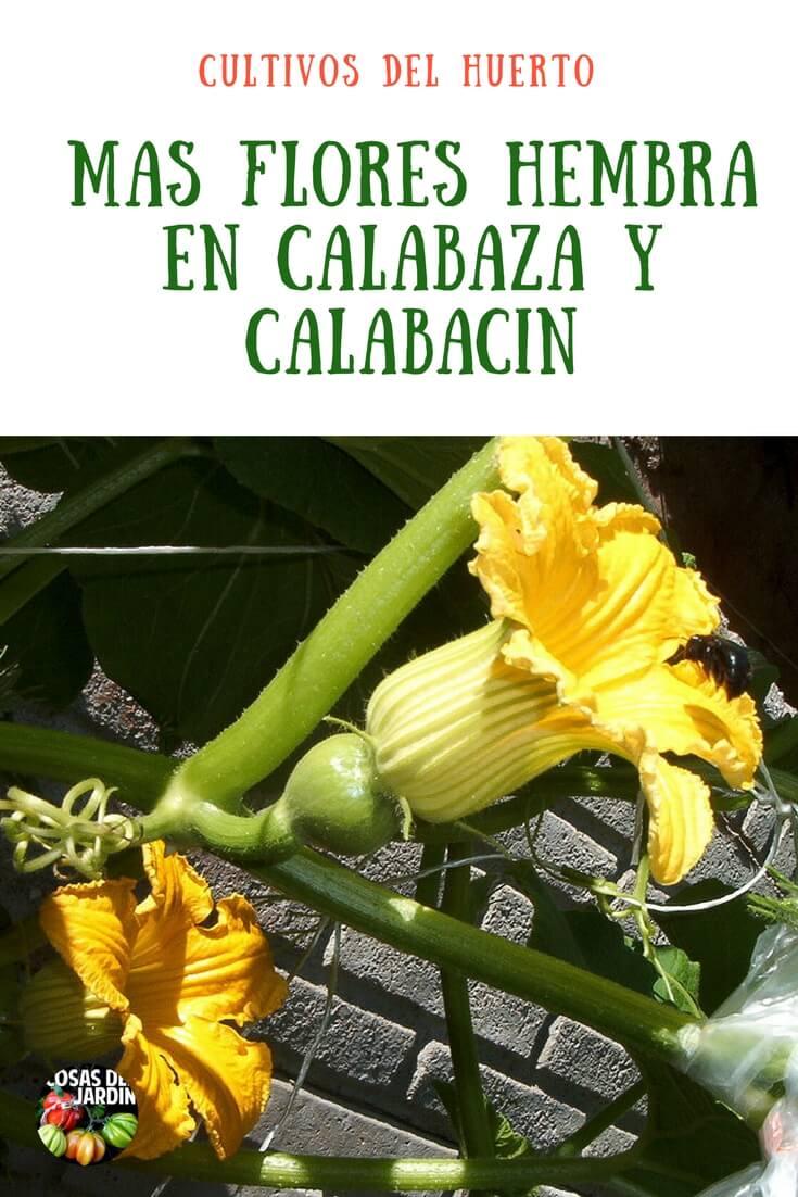 Calabaza y Calabacín: Cómo alentar a las plantas a que den flores hembra? #huertourbano #jardin #jardineria #plantas