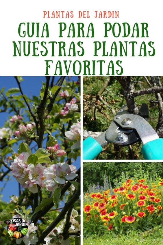 #jardin #jardineria #huertourbano #huerto #plantas
