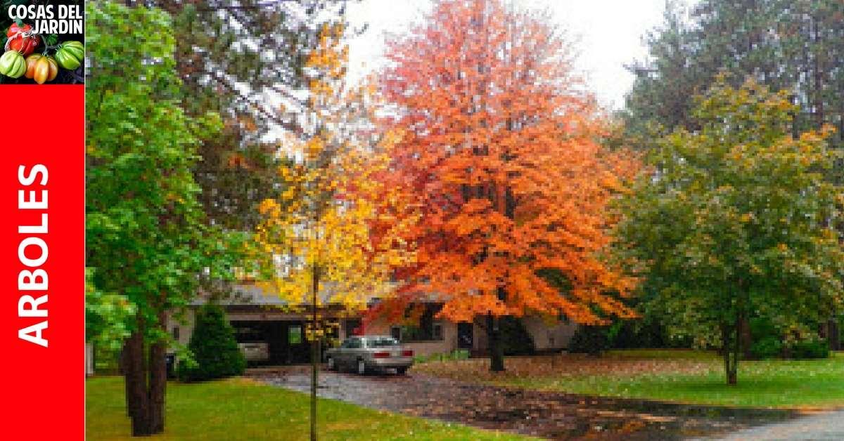 Calendario de mantenimiento de árboles y arbustos