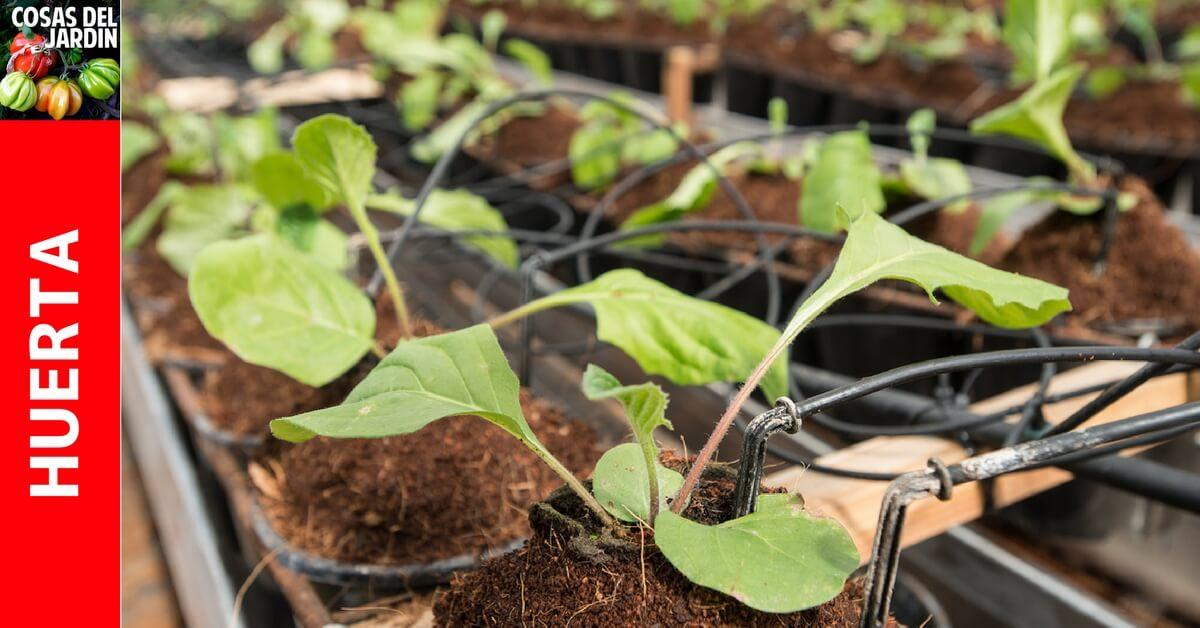 Falta de agua en las Plantas – Cómo saber si una planta necesita agua?