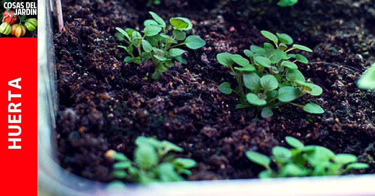 Guía completa de cultivo de orégano