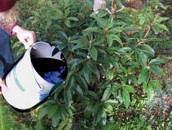 Cómo hacer te de compost en 5 pasos, beneficios y precauciones - 6