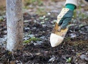 mejorar la estructura del suelo con café usado