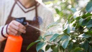 Todos los usos de la leche en el huerto y el Jardín - Fertilizante, Fungicida y Más - 1