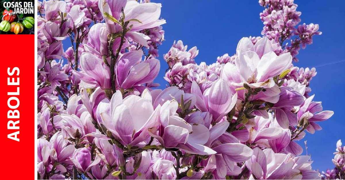 Guía de cuidados de la Magnolia