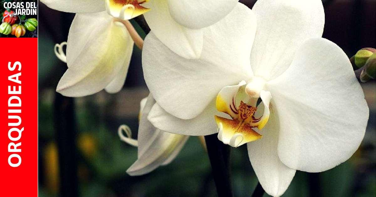Consejos basicos sobre el cultivo de orquideas – Para Principiantes