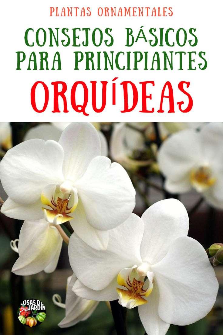 """Cultivo de Orquideas. Todo es cuesión de práctica. Debes comenzar con una orquídea """"fácil"""", y con ella aprender los principios básicos del cultivo de orquídeas. Serás adicto a estas plantas fascinantes en muy poco tiempo. Sigue leyendo para aprender sobre el cultivo de orquídeas para principiantes. #Flores #Plantas #Jardín #Jardineria #Huerto #Huertourbano"""
