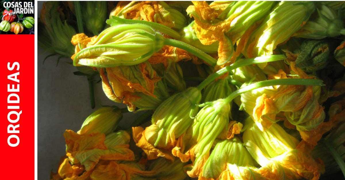 Cómo cosechar flores de Calabaza: cómo y cuándo recoger las flores de calabaza