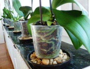 regar orquideas 2