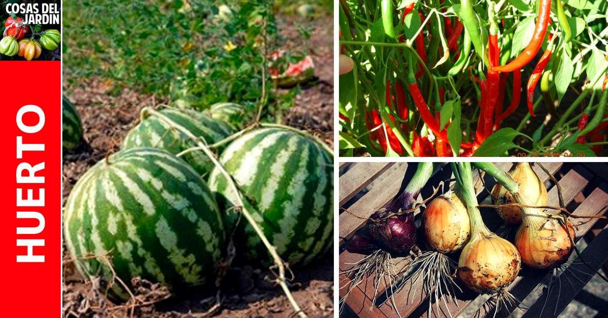 Cuál es el mejor momento para cosechar tus cultivos de verano