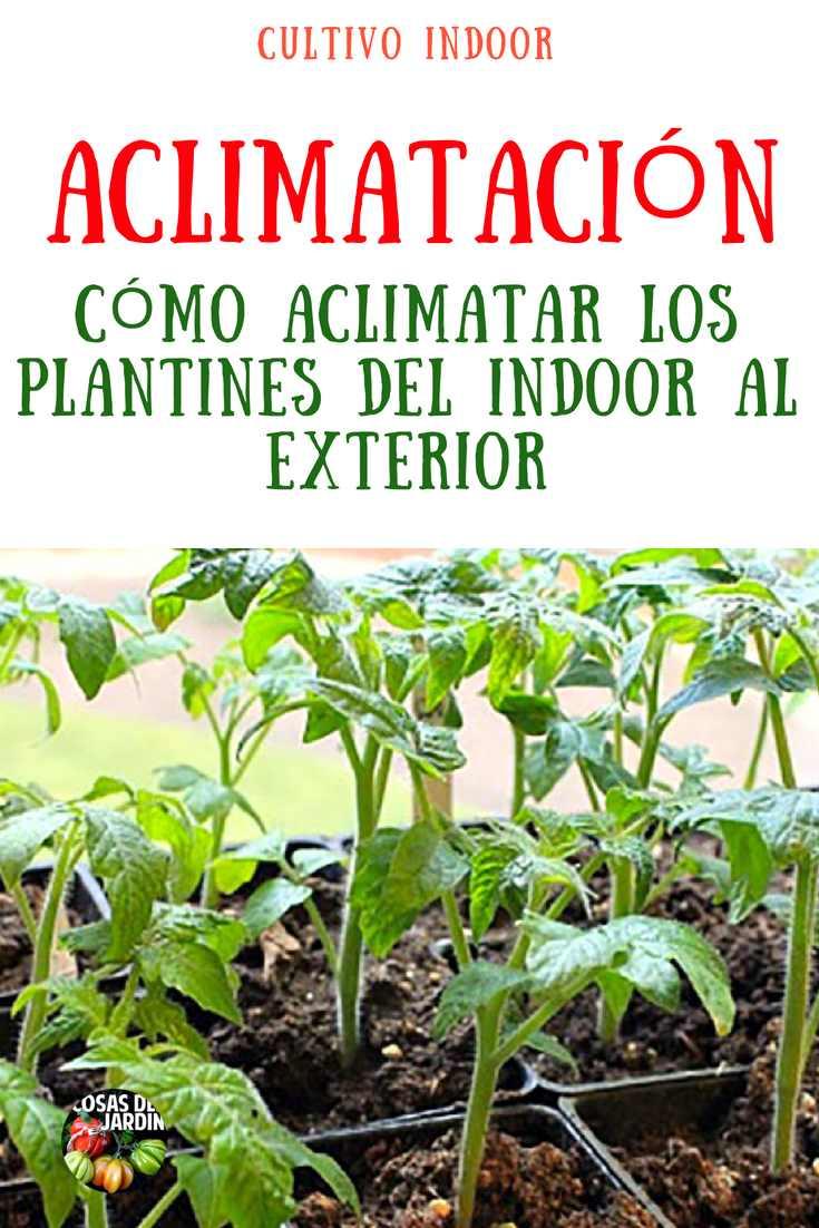 """Los plantines tan mimados que se cultivaron en interior o en un invernadero necesitarán un período para adaptarse y aclimatarse a las condiciones exteriores, antes de plantarlas en el jardín. Este período de transición se llama """"endurecimiento"""" o """" aclimatación"""". #Jardineria #Jardin #Huerto #Huertourbano #Cultivar #Tomate"""