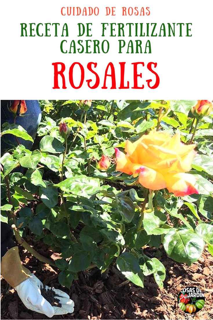 Como hacer un abono casero para Rosas y como Fertilizar Rosas. Las rosas necesitan muchos nutrientes para estar espectaculares, pero eso no tiene que ser algo complicado, Sigue leyendo para aprender sobre los mejores consejoas para fertilizar rosas y obtener una facil receta casera de fertilizante para rosas #Cultivar #Jardin #Jardineria #Huerto #Huertourbano