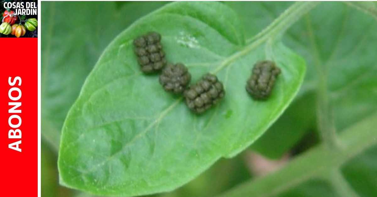 Qué es el Frass? Guano de insecto como fertilizante?