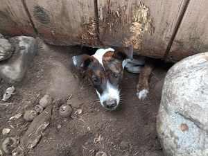perro cavando bajo cerca
