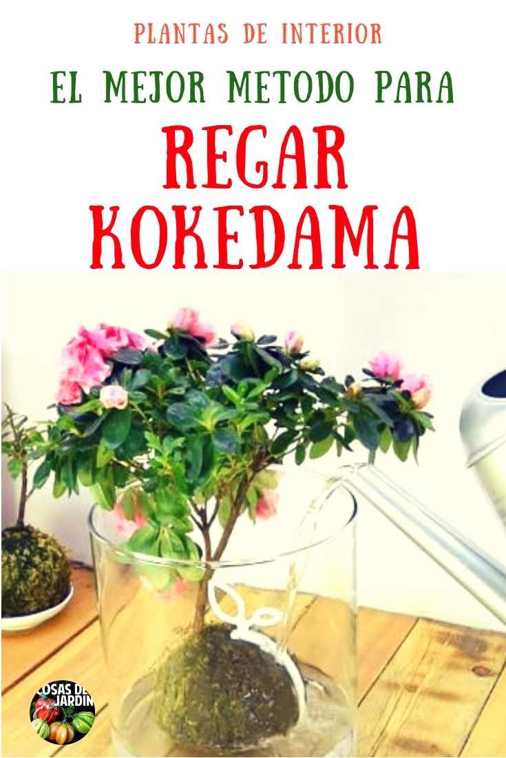 Cuidar un kokedama es muy facil. Sigue estos pasos para aprender a regar correctamente un kokedama #Jardin #Jardineria #Huerto #Huertourbano #Kokedama