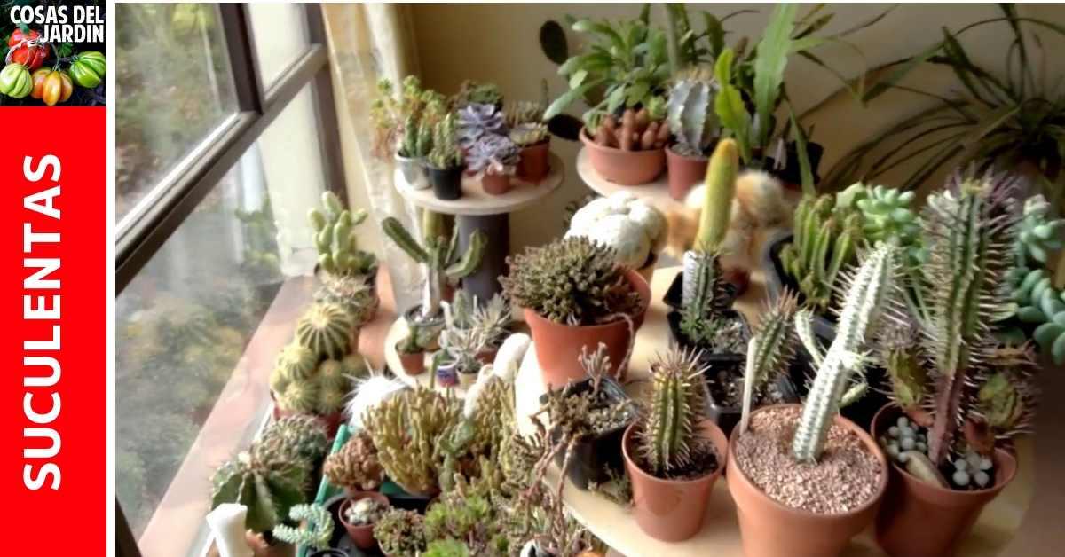 para proteger tus cactus y suculentas del frio del invierno Son pocos trucos que tienes que conocer. Sigue leyendo para aprender sobre como hacer para que tu suculenta no se muera en invierno #Jardin #Huertourbano #Huerto #Jardineria #Suculentas