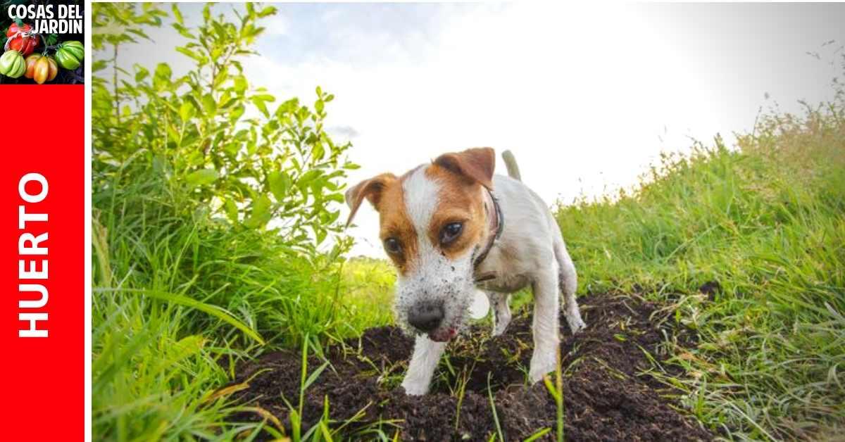 Cómo hacer para que tu perro deje de cavar en el jardín