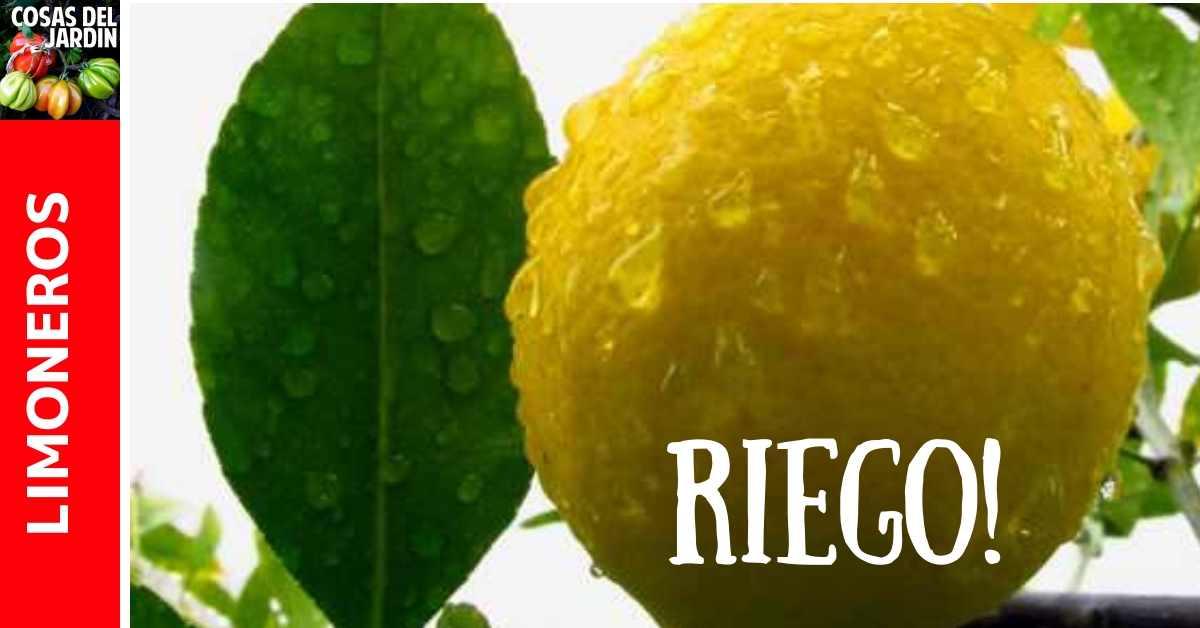 Para los dueños de limoneros en climas cálidos y húmedos, el riego de cítricos no es algo en lo que a menudo deban pensar. Pero en climas más fríos o más secos, el riego puede ser un tema para tener en consideración. #Cultivar #Huerto #Huertourbano #Jardin #Jardinería