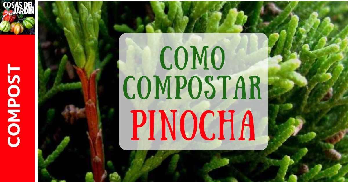 Se puede compostar la pinocha? Cómo compostar las hojas del pino?
