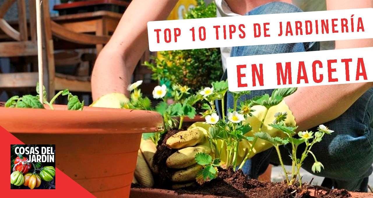 10 tips de jardinería en macetas para principiantes