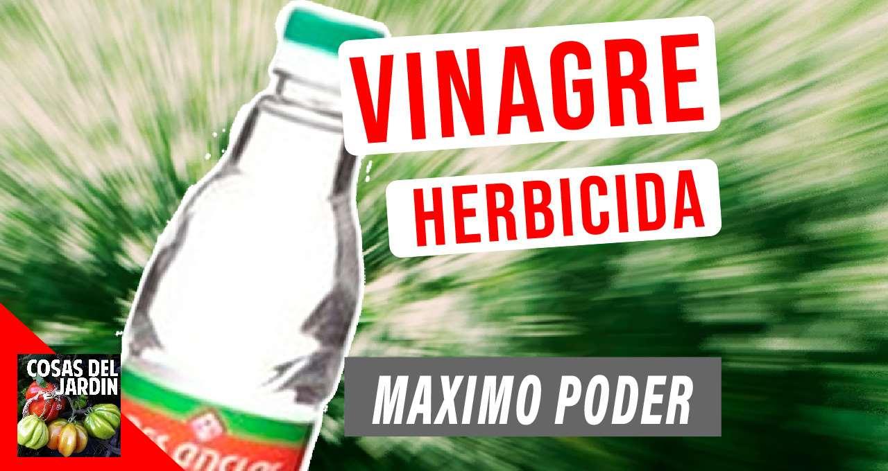 Vinagre herbicida: como se aplica, cada cuanto aplicarlo, qué precauciones tenemos que tener y como hacer para obtener la máxima potencia #huerto #Huertourbano #jardin #Jardineria #cultivar