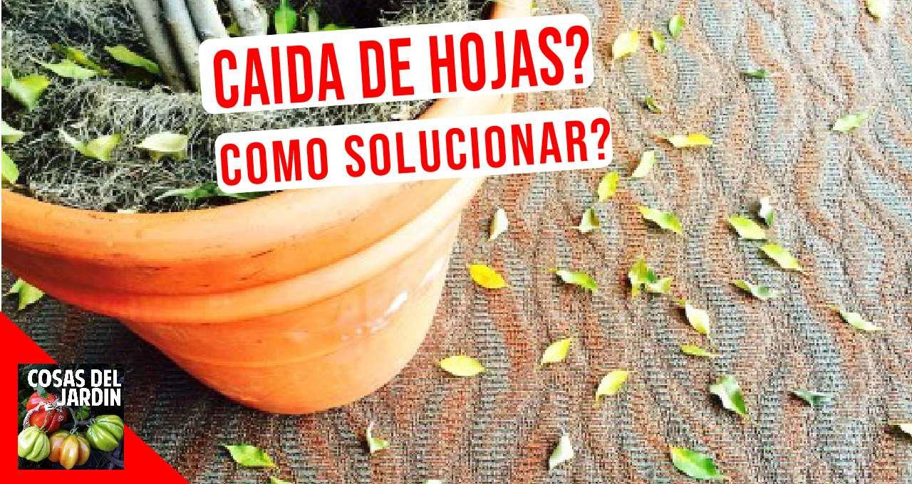 En este articulo aprenderemos a diagnosticar las causas de la caida de las hojas de tus plantas y las formas de corregir esta situación. #huerta #huerto #Huertourbano #jardin #Jardineria #cultivar