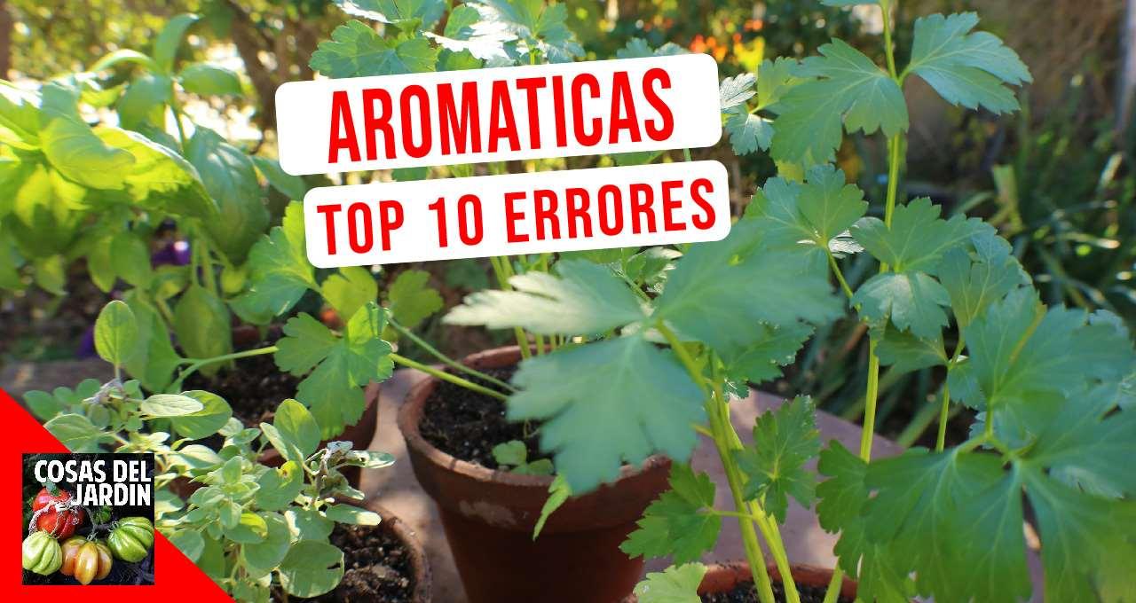Aprender de estos 10 errores que en realidad son una guía de cultivo de hierbas aromáticas #aromaticas #huerto #huerta #Huertourbano #jardin #jardineria #Cultivar