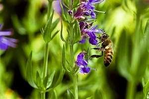 Las plantas con aromas penetrantes se encuentran entre los disuasores de insectos más exitosos. Experimenta con alguna de estas que te dejo a continuación #Huerto #huertourbano #Cultivar #Jardin #Jardineria